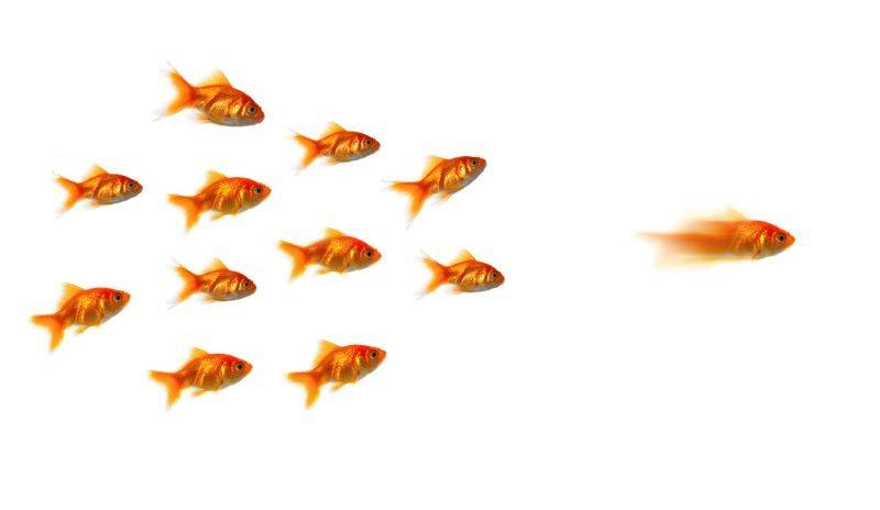 Market leadership - رهبر بازار - رهبری در بازار - رهبری بازار