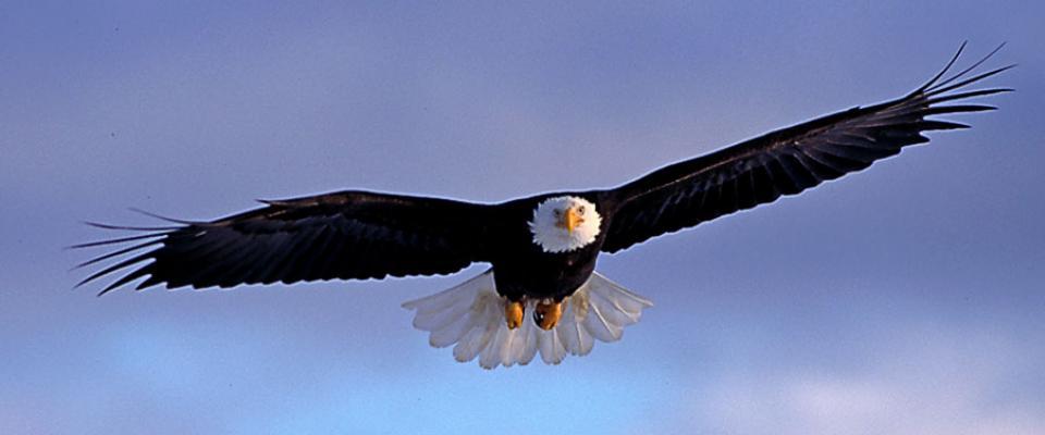 پرواز عقاب - پرورش مدیر بازاریابی